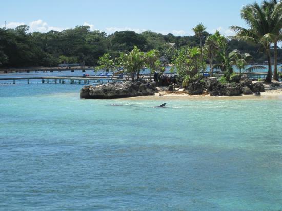 Roatan Institute for Marine Sciences - Anthony's Key Resort: the playpen