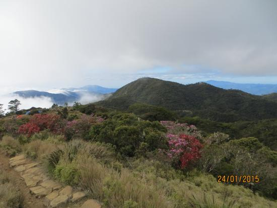 Mt. Pulag National Park: coming down to campsite