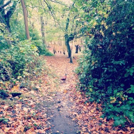Kelsey Park: Beautiful local park.