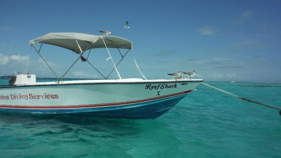 Anwar Tours: Andrew's bote