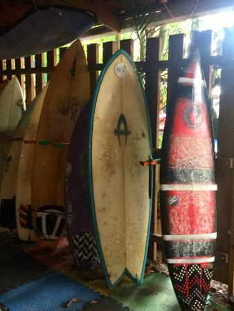 Las Camas Budget Hostel: surf board rentals, rentals also available through Beds on Bohio