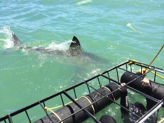 Shark Cage Diving South Africa: lunch!  :)
