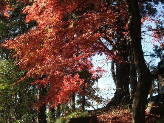 Yonezawa Castle Ruins / Matsugasaki Park: 菱門橋から入ると、紅葉がきれいなスポットがあります