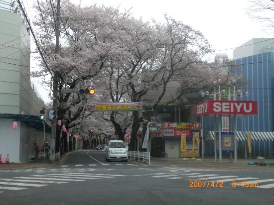 Cherry Trees of Five Fragrances in Tokiwadaira