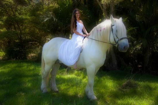 Pulau Waiheke, Selandia Baru: White Horse Wedding
