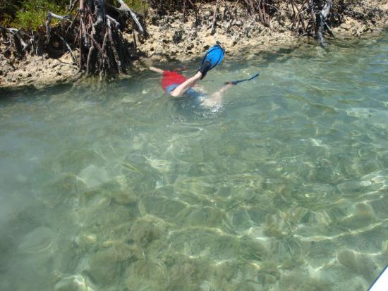 Spanish Cay: Snorkling with a variety of sea life