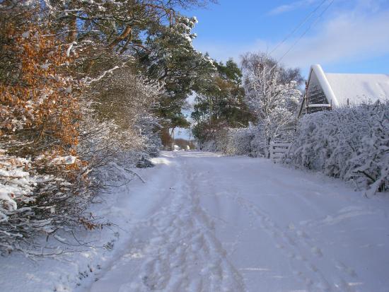 Whitfield Farmhouse B&B: Our lane in snow!