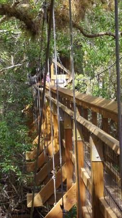 Myakka River State Park: swinging bridge