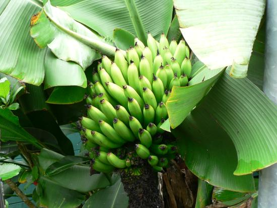 Les Jardins d'Heva : Fuori dall'hotel palma con banane