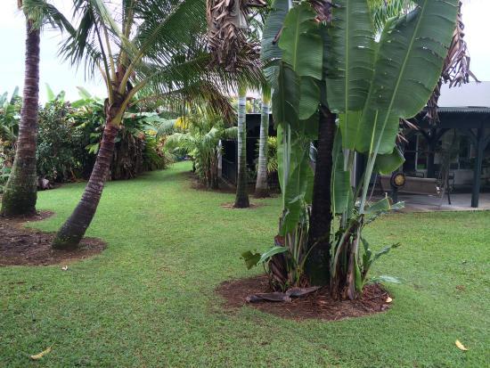 Island Goode's: Well kept garden