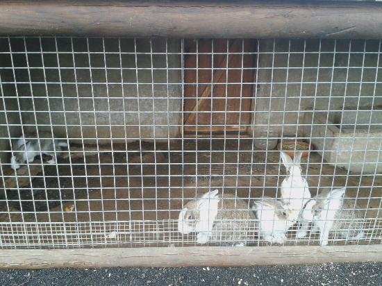 Pardelas Park: Einer vor drei Hasenkäfigen