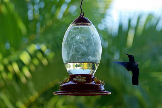 Gite Macanao : Envol du colibris