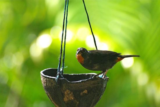 Gite Macanao : Oiseau