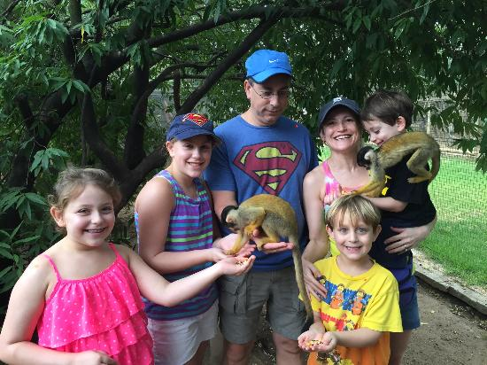 Monkey Town Primate Centre: Fun with squirrel and wolf monkeys