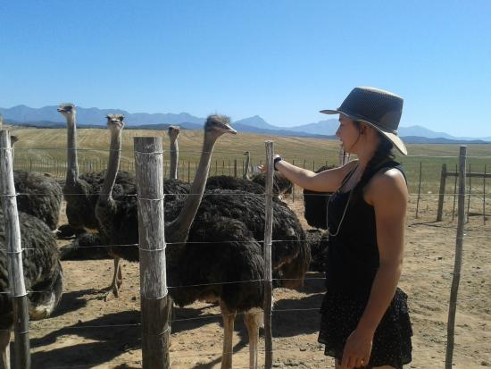 Berluda Farmhouse & Cottages: Our lovely tour guide Anja