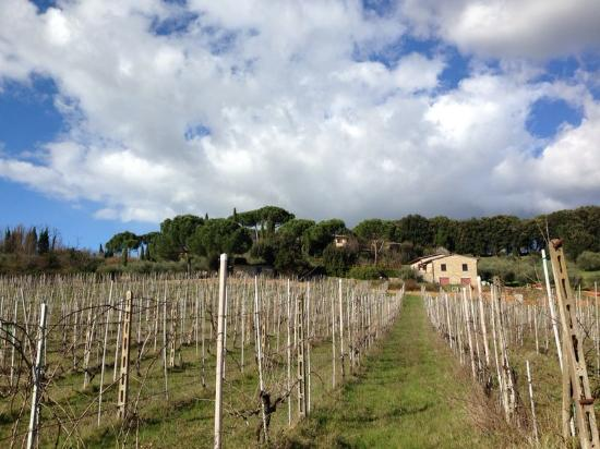 Villa Agostoli: vineyards