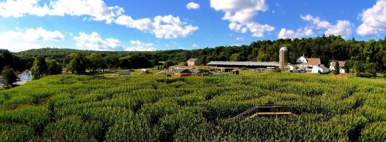 Whitinsville, MA: 2014 Corn Maze