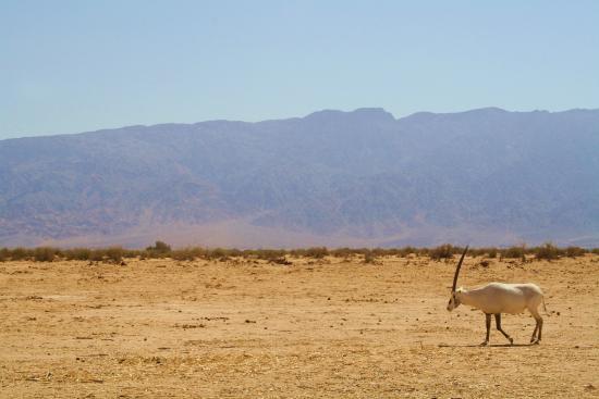 Hai Bar - Wildlife Reserve : Safari ride