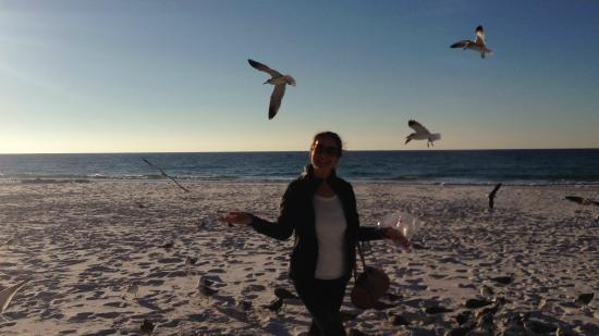 Sundestin Beach Resort: Feeding the seagulls