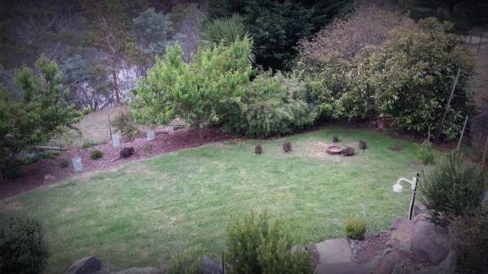 Launceston Bed and Breakfast Retreat: Beautiful yard