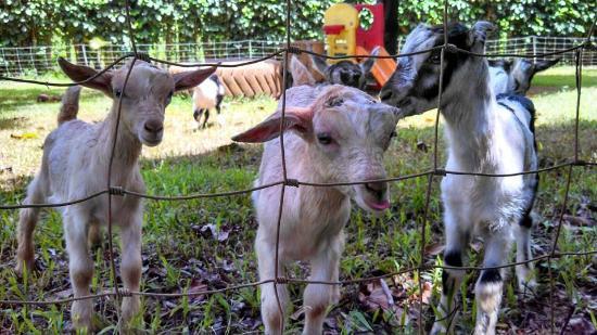 Kauai Kunana Dairy Farm Tour