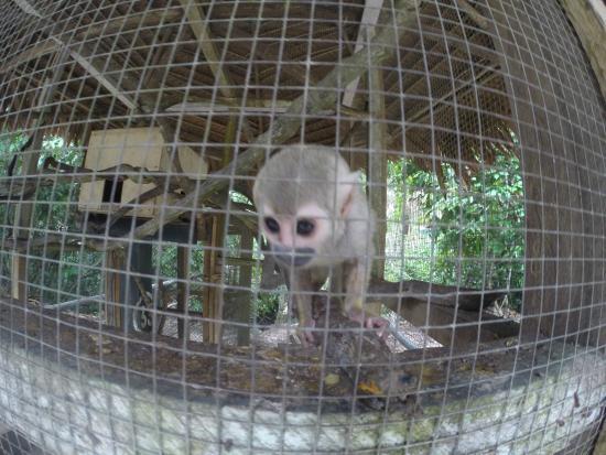 Yacu Puma Center: Monkey