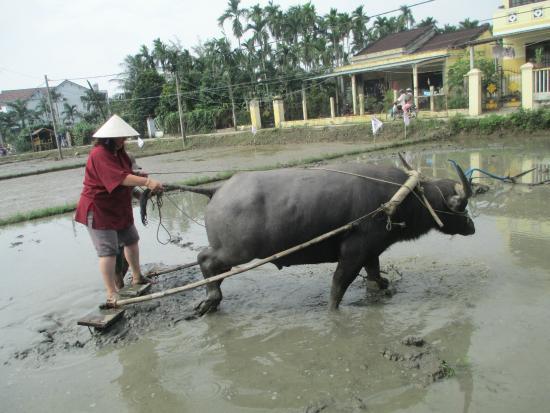 Hội An Ecotourism