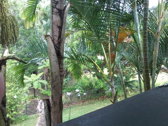 Sanctuary Resort Motor Inn : View of rear grounds from the verandah..