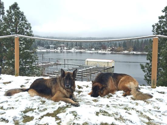 Red Lion Templin's Hotel on the River: Cody, star of Sit Stay Ride and his sidekick Woden.