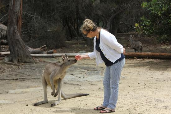 Australia Walkabout Wildlife Park: Sharing a moment