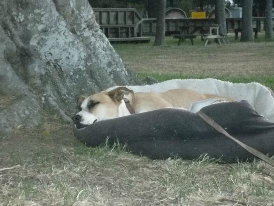 Quinney's Bush Camp: Happy tired dog