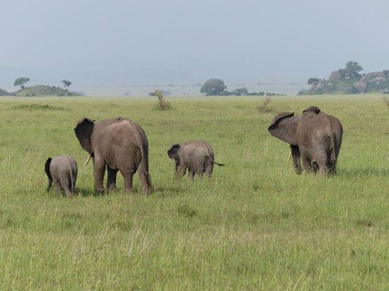 Ernest Magic Tours & Safaris: Tanzania Safari with Ernest