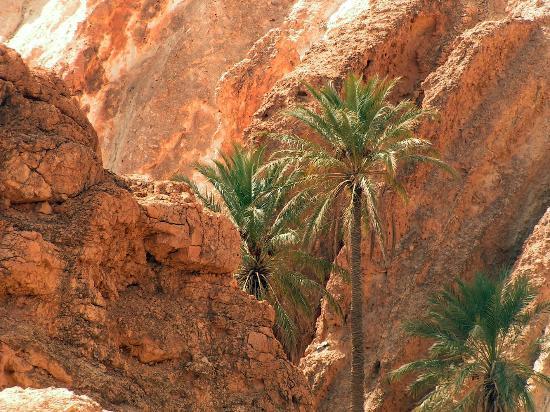 Sahara Desert : Schlucht von Chbika