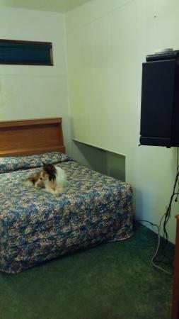شايدي أوكس موتل: my dog watching that door w the padlock