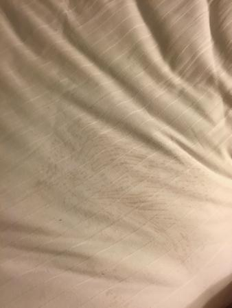 Holiday Inn Express Denver Downtown: Soiled sheets