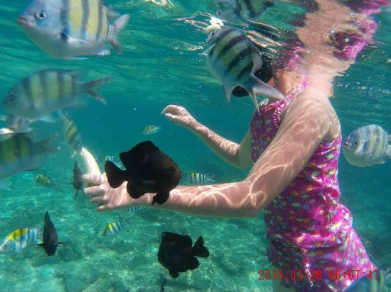Phuket Snorkeling by  Offspray Leisure : My daughter feeding the fish a banana while snorkeling in Phi Phi