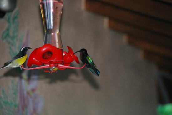 Sunset Bay Club & SeaSide Dive Center: Moments magiques avec les magnifiques colibris