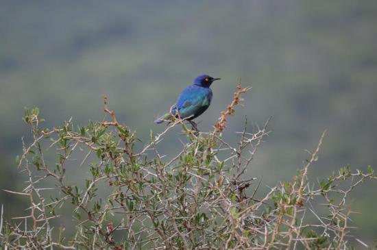 Alan Tours: Bird in Addo