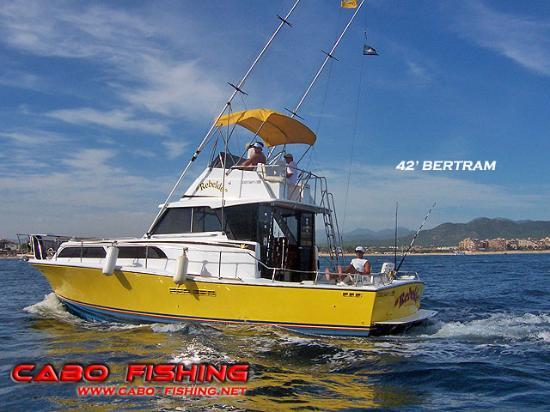 Foto de cabo fishing charters cabo san lucas 42 39 bertram for Cabo fishing charters