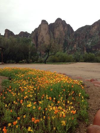 Saguaro Lake Guest Ranch: Grounds