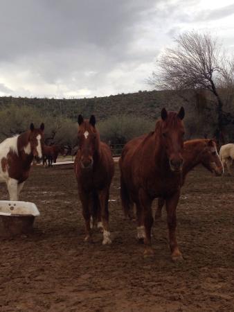 Saguaro Lake Guest Ranch: Horses
