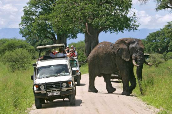 Bayango Tours & Safaris - Day Tours