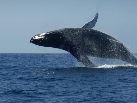 Royal Decameron Complex: whale watching with Vallarta Adventures
