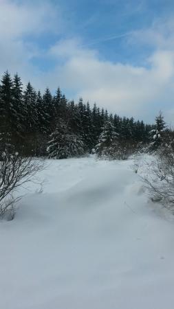 Le Mont Rigi: Matinée  au Signal  de  Botrange