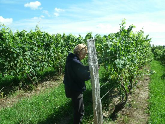 Seneca Lake Wine Trail: Visiting a vineyard