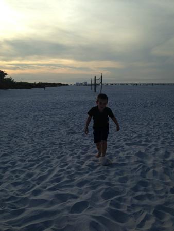 Pinchers: plenty of beach to run wild