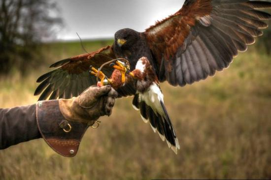 Wheatly Birds of Prey Centre