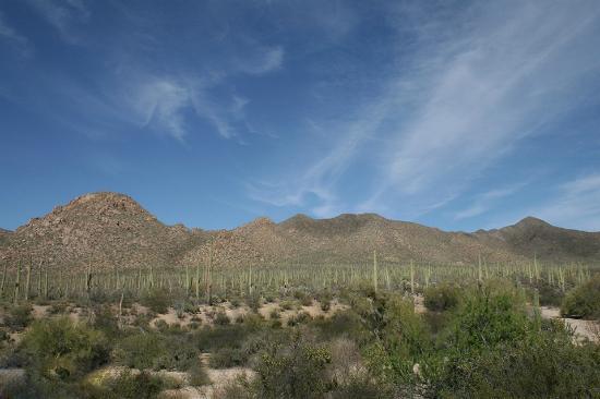 Rameda Foothills Resort: saguaro national park