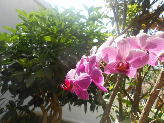 Junto Al Mar: Garden front house