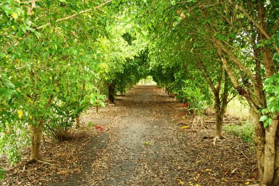 Passiflora Camp